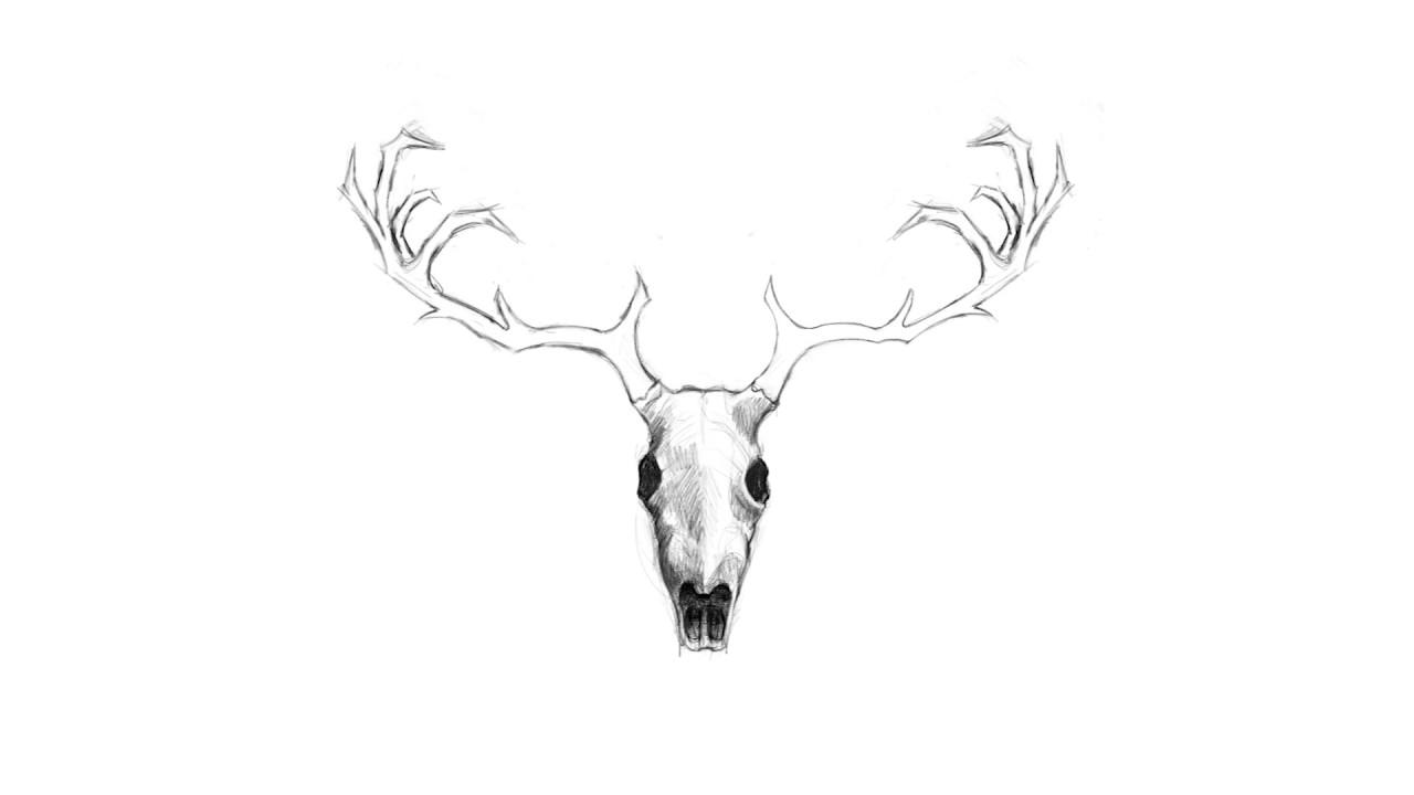 1280x720 Deer Skull