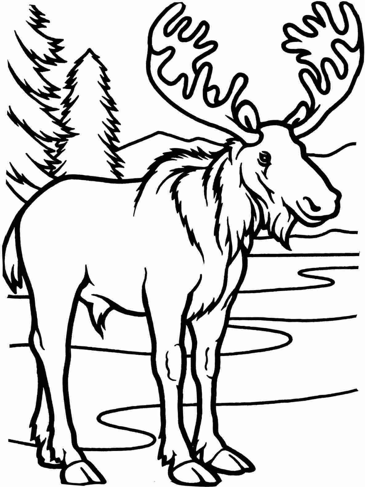 1185x1580 Easy Deer Drawings In Pencil