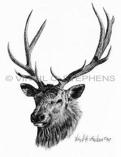 236x307 best black white wildlife drawings images in wildlife