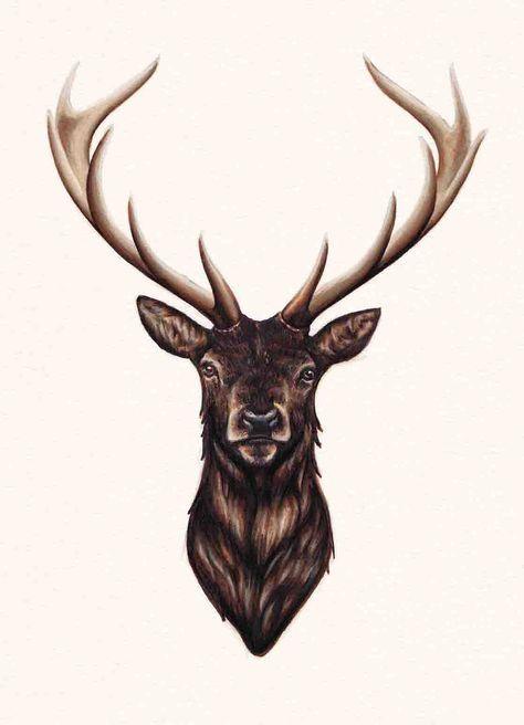 474x656 Stag Sketching, Charcoal, Pencil Etc Deer Head Tattoo, Deer