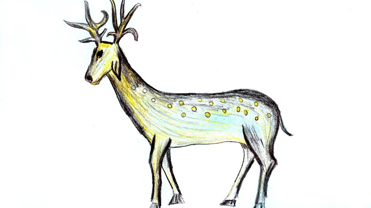 1280x720 Wood Pencil Art,,drawing A Deer