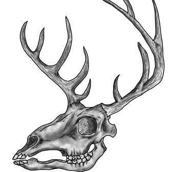 336x336 Animal Skull Drawing Simple Pencil Easy With Horns Dead Iydunetwork