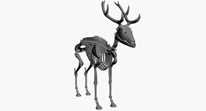 Deer Skeleton Drawing