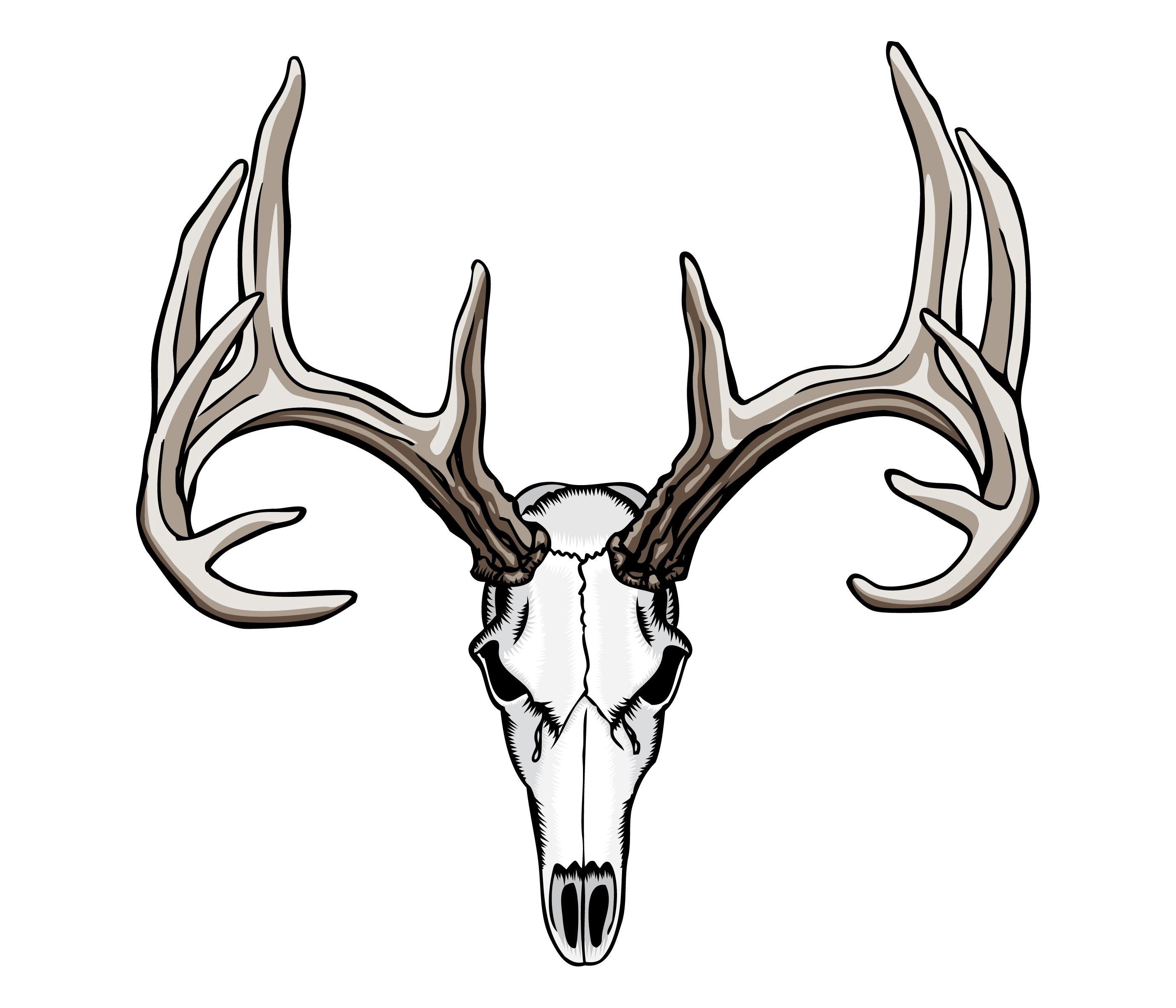 2800x2400 whitetail deer skull tattoos art nouveau deer skull drawing