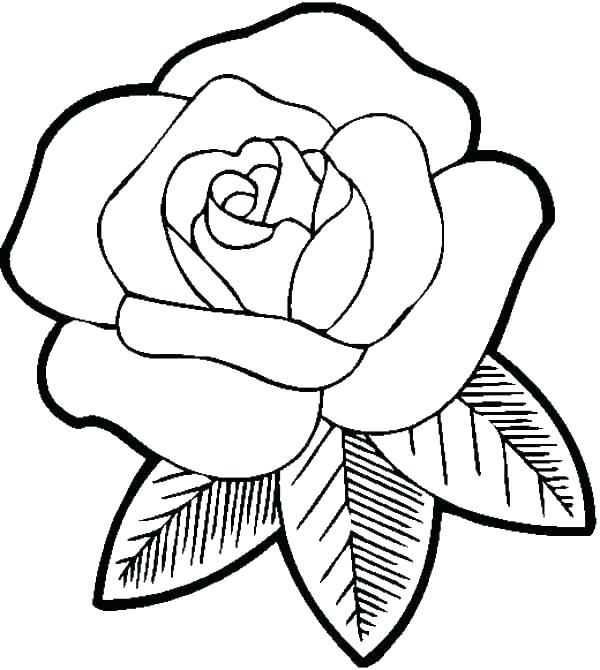 600x670 Realistic Rose Coloring Pages