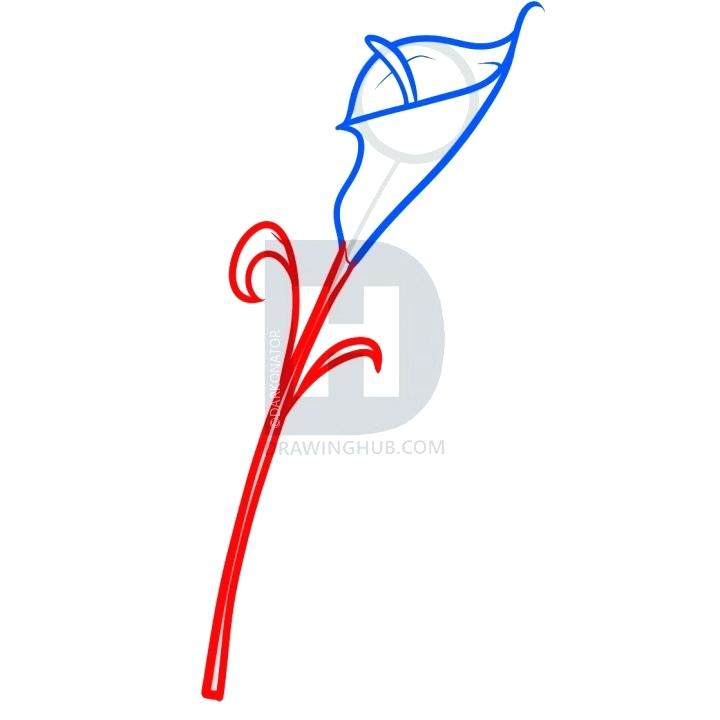 720x720 how to draw a calla lily calla lily calla lily drawing easy