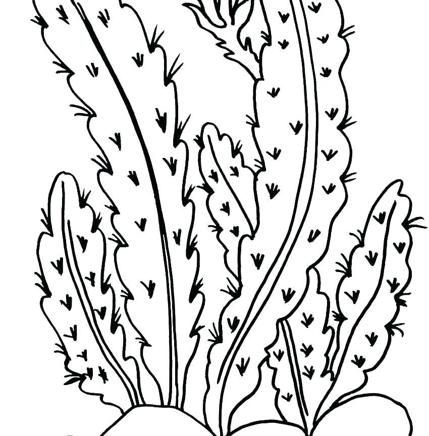 850x864 Desert Animal Coloring Pages Free Printable Desert Animals Desert