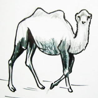314x314 Desert Animals Drawing Drawing And Crafts