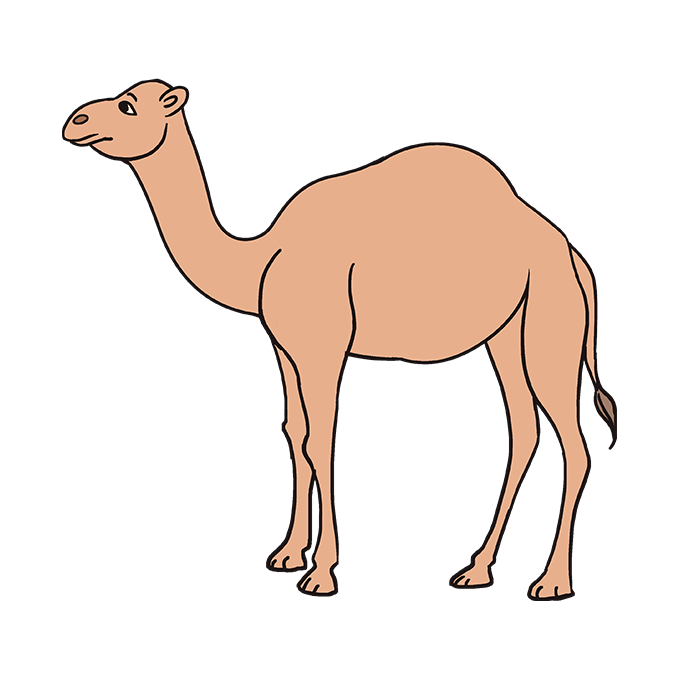 680x678 How To Draw A Camel