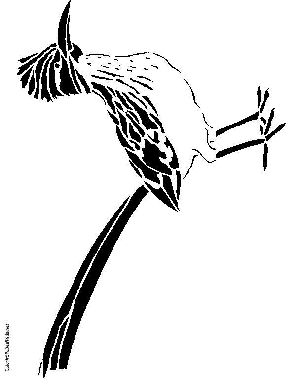 612x767 Birds Road Runner Bird