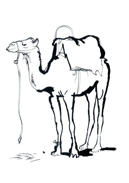 500x707 Drawing Of A Camel