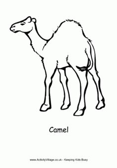 236x337 Best Camel Line Images Camel, Camels, Line