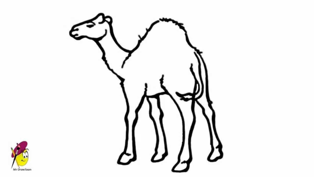 1280x720 Camel