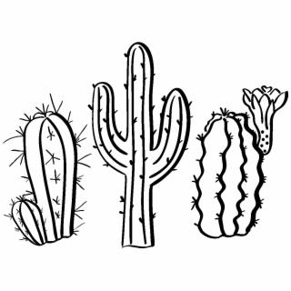 320x320 hd sticker boheme cactus du desert ambiance sticker