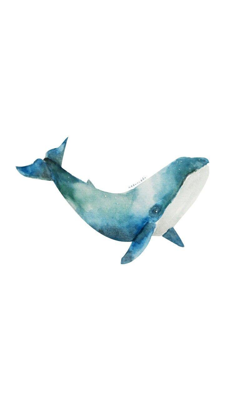 720x1280 Naavocado Whale Watercolor