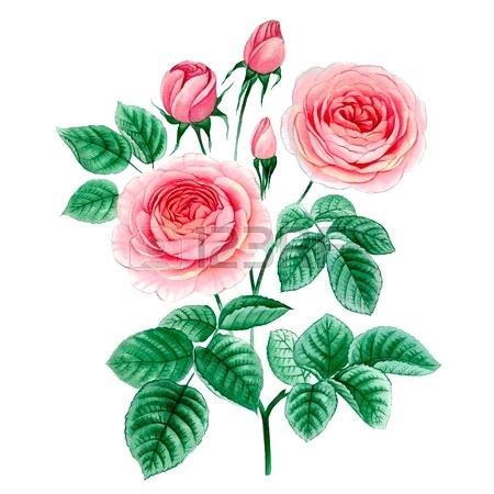 450x450 hand drawn roses cartoon hand drawn rose red flower leaf hand