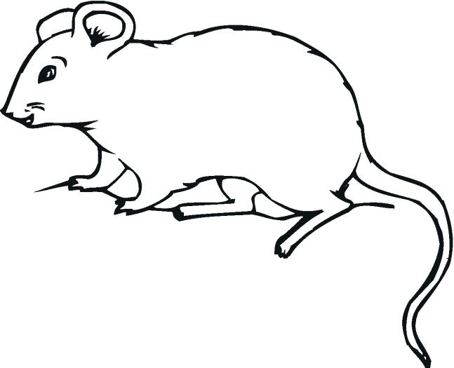 647x525 drawing of rat pencil sketch rat
