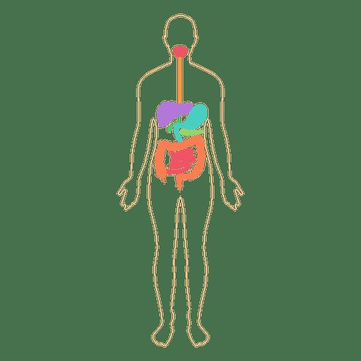 512x512 Digestive System Food Digestion Body