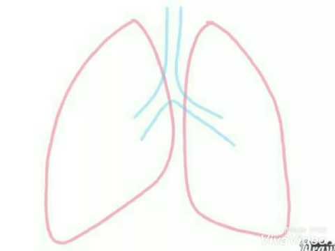480x360 Easy Method To Draw Human Respiratory System