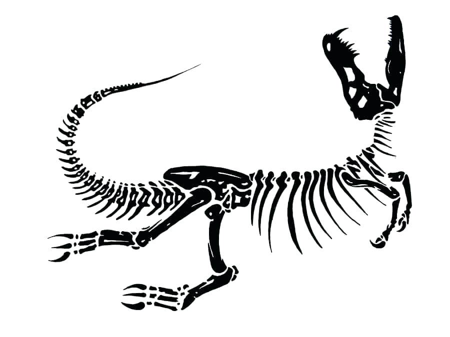 900x675 dinosaur skeleton drawing skeleton of dinosaur dinosaur skeleton