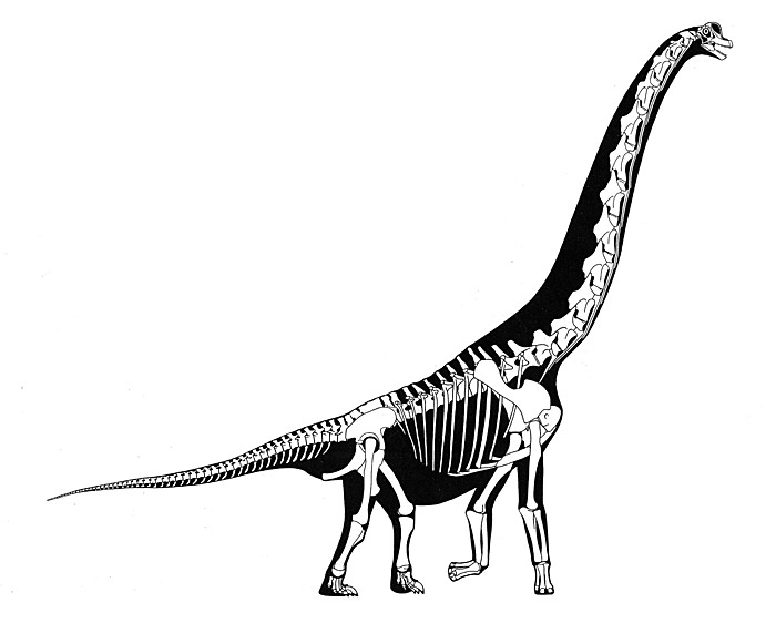 Dinosaur Fossil Drawing