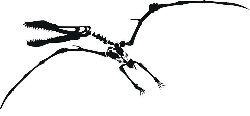 970x451 dinosaur fossil drawing dinosaur fossil drawing easy