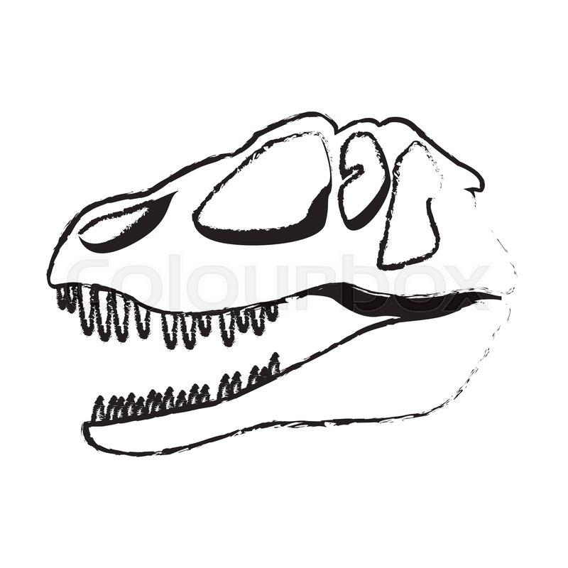 800x800 Dinosaur Skull Predator Ancient Fossil Stock Vector Colourbox
