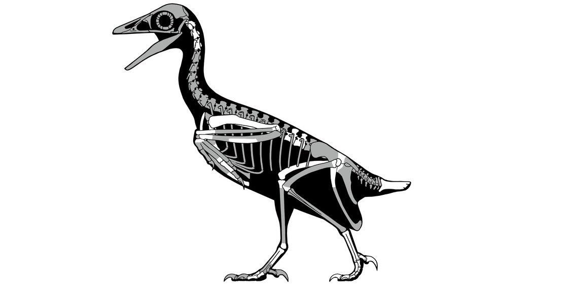 1128x579 Fossil Bird Soared Above Utah's Dinosaurs