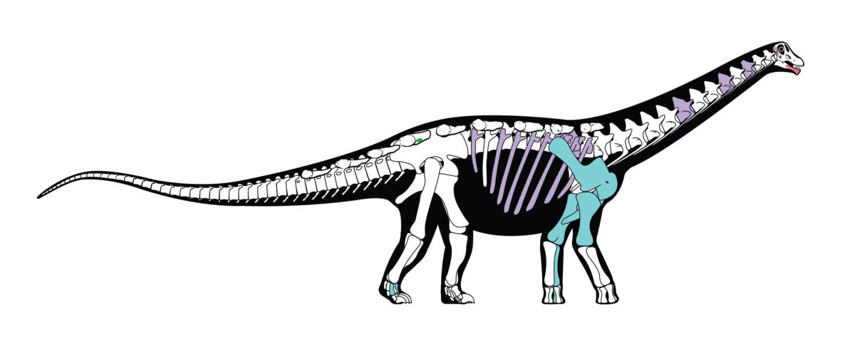 1200x501 The 'holy Grail' Of Dinosaurs Discovered In The Sahara