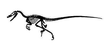 425x194 Raptor Dinosaur Fossil Decal, Decal Sticker Vinyl Car