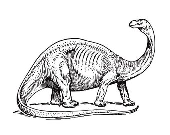 340x270 Dino Fossil Drawing Etsy
