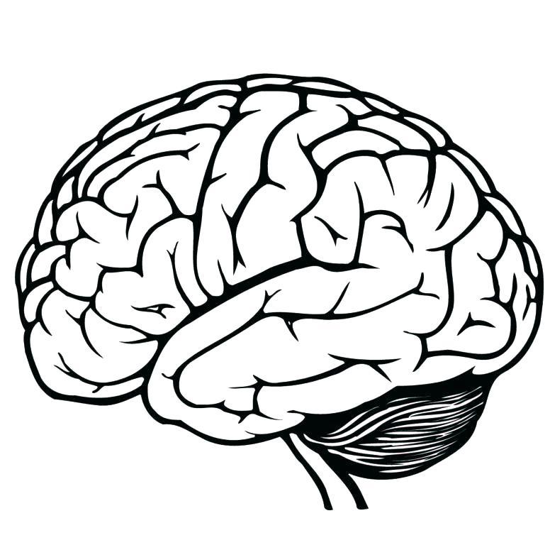 776x768 Brain Line Drawing Brain Coloring