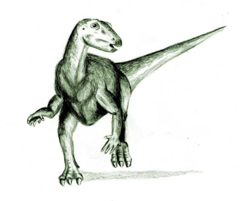 800x660 Filethescelosaurus