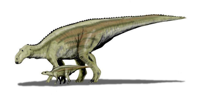 800x384 Maiasaura, Montana's Good Mother Lizard Mtpr