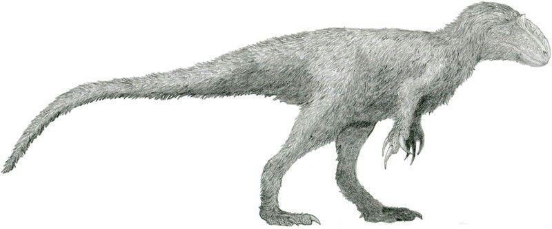 800x333 Yutyrannus Dinosaurs Prehistoric Creatures, Pencil