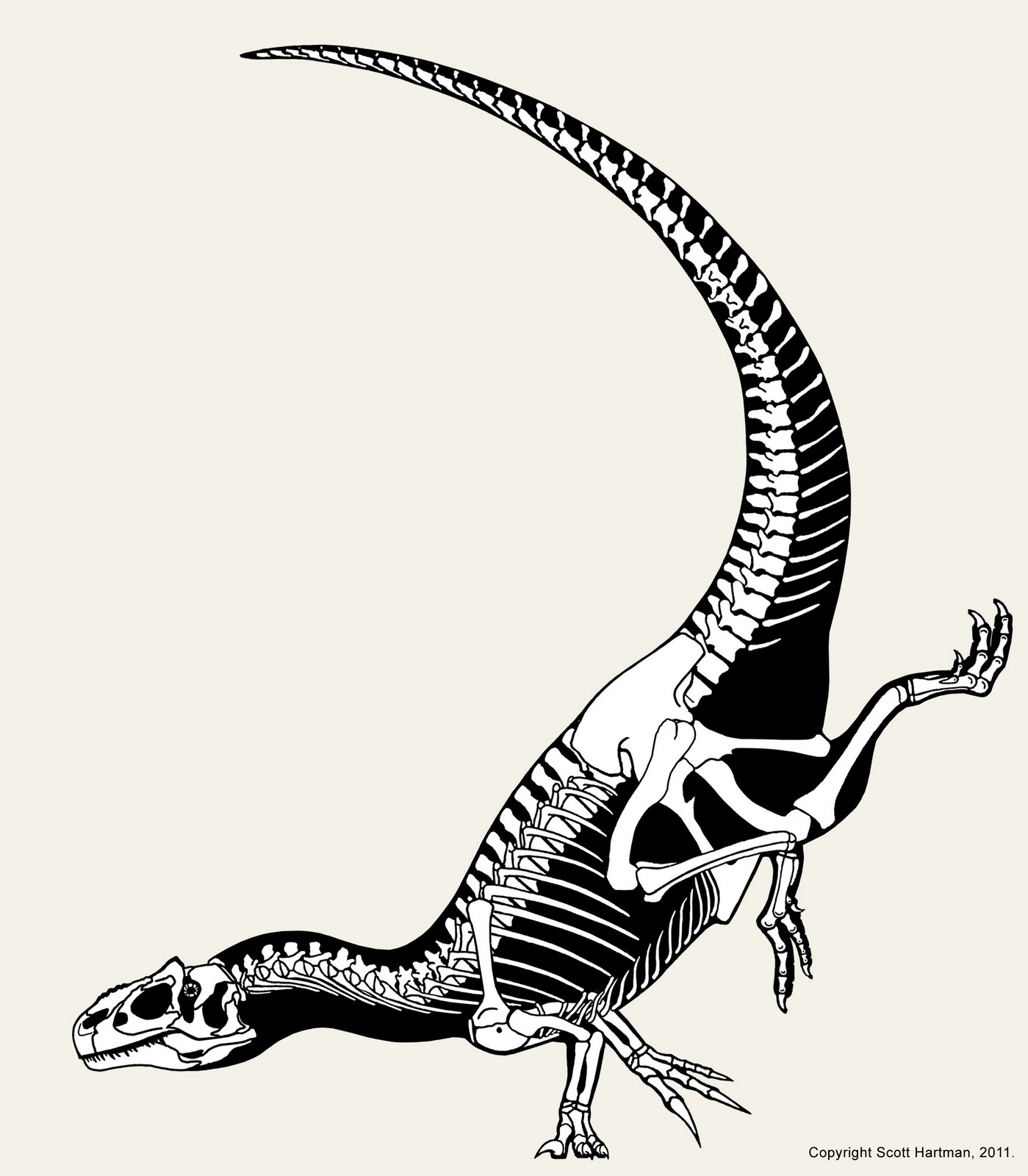 1399x1600 Skeleton Drawing Allosaurus For Free Download
