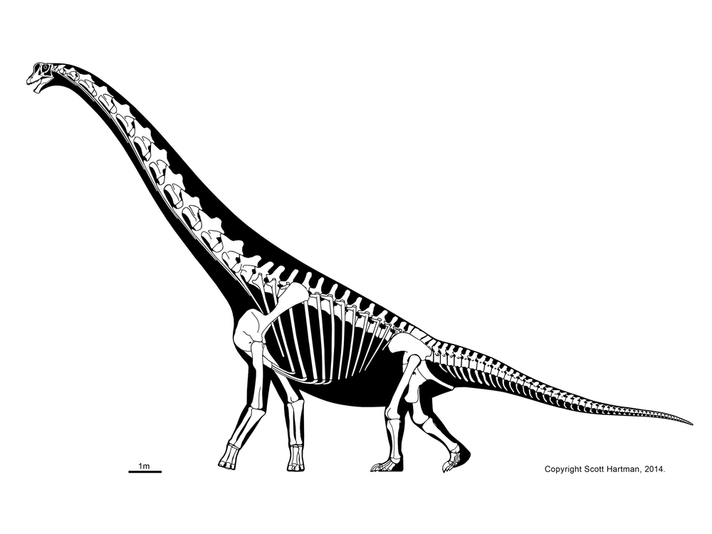 1000x750 Sauropods And Kinscott Hartman's Skeletal