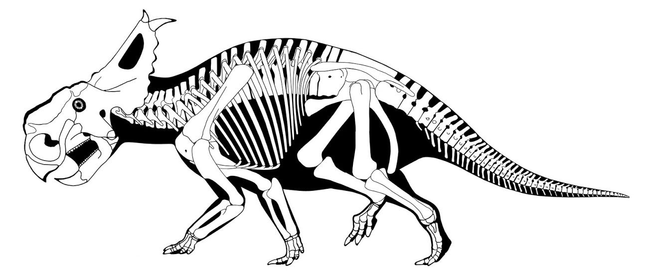 1302x554 Scott Hartman Pachyrhinosaurus Arcanum Are Acrobatic Arachnids