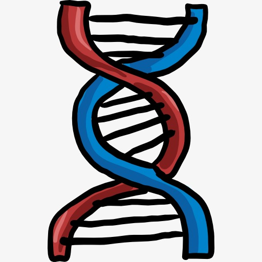 512x512 a dna model, dna clipart, dna, model png image and clipart