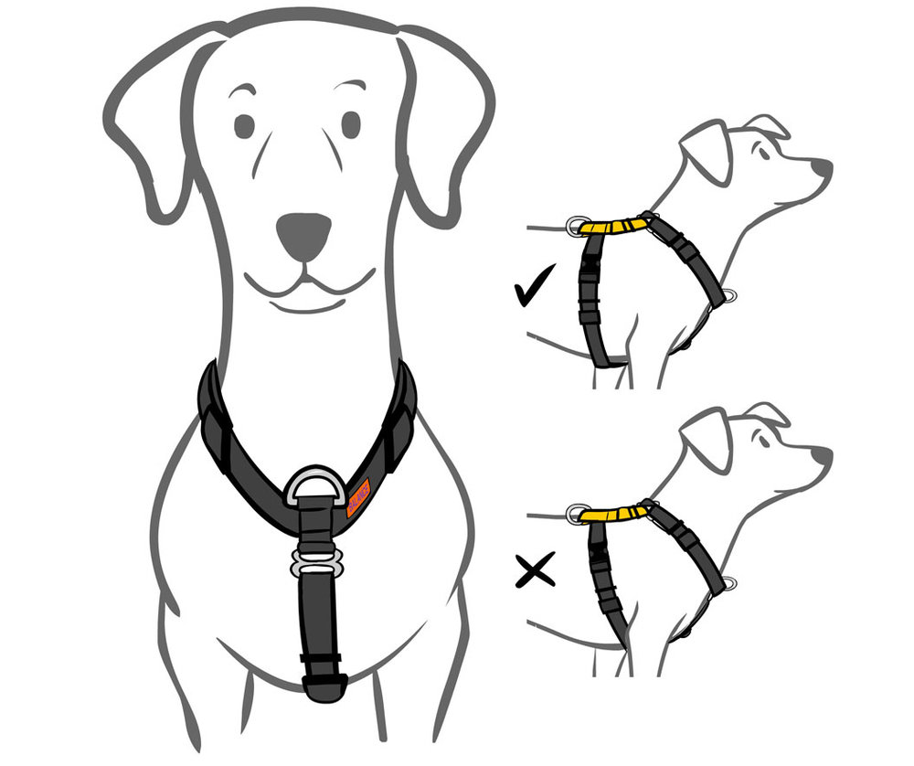1000x838 Harnesses Homeskooling Dogs