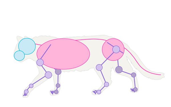 600x377 Drawing Illustration Animals Cats Art Inspiration Art Reference