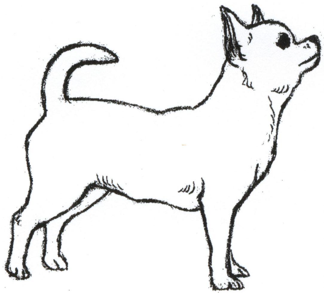 Dog Cat Drawing