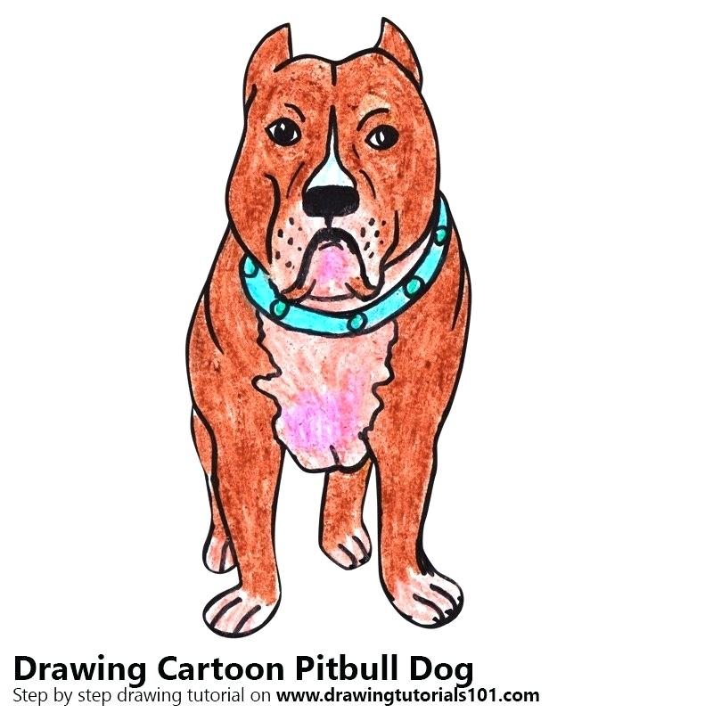 800x800 pitbull drawings image titled draw a step pitbull dog drawing step