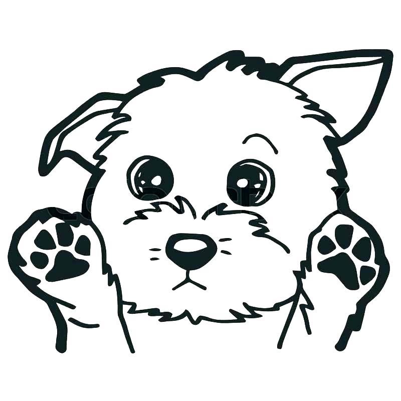 800x800 puppy cartoon drawing drawing pug puppy cartoon puppy cartoon