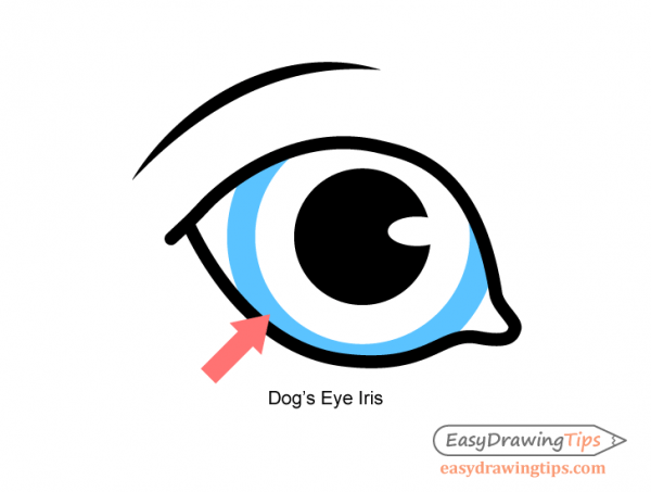 600x453 Dog Eyes Drawing