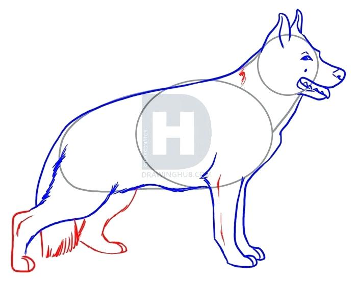 700x551 How To Drawl A Dog