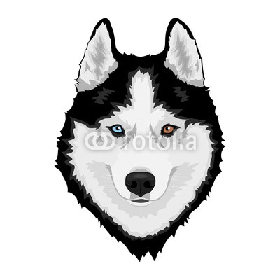 400x400 Black And White Siberian Husky With Multi Colored Eyes Hand Drawn