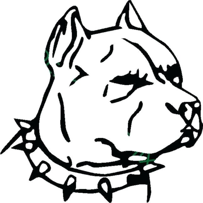 648x648 pitbull face drawing image titled draw a step pitbull dog how
