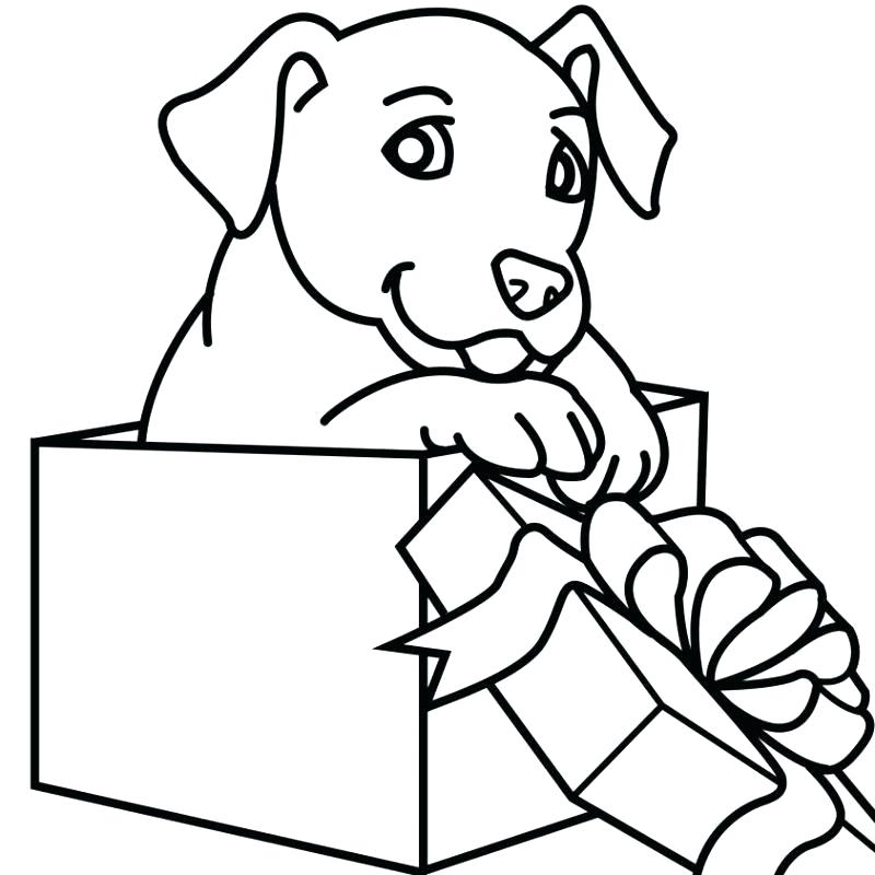 800x800 puppy line drawing how to draw a puppy step labrador puppy