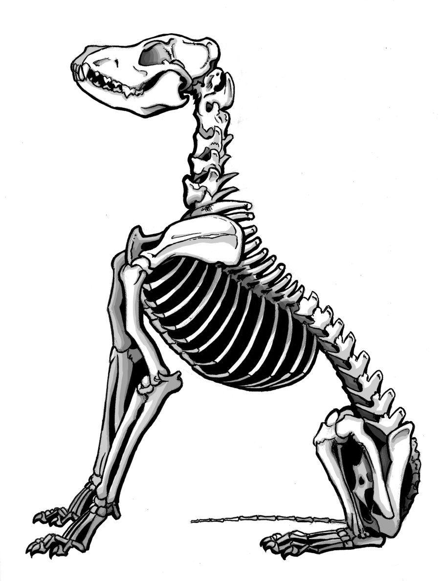 900x1190 Dingo Skeleton